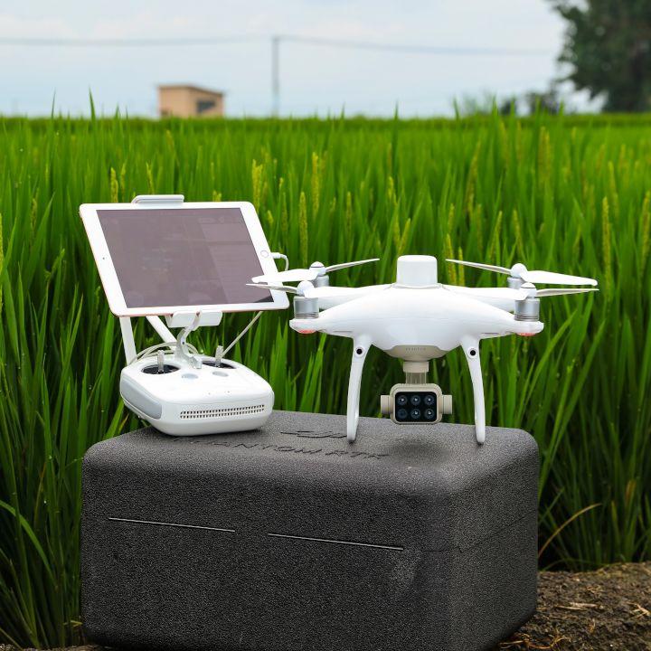 Zastosowanie dronów w rolnictwie. Dron DJI P4 Multispectral na polu zielonego zboża